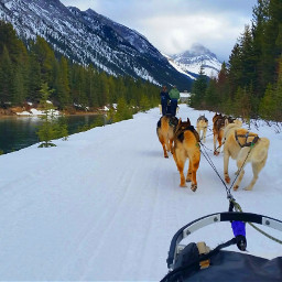 outdoors dogsledding canmore winter canada pcmyview my pcmyview