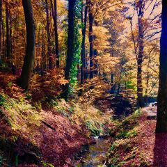 forest forests woods colorful color