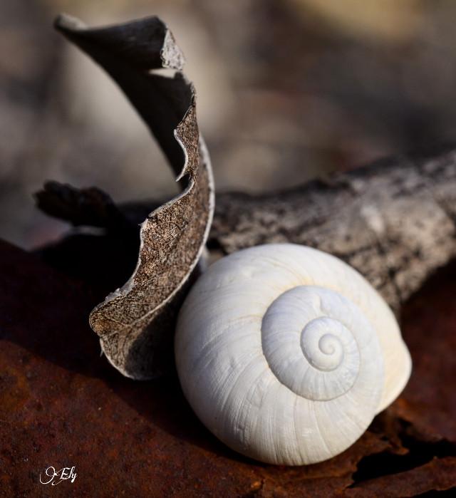 #nature  #tree #nail   #macro