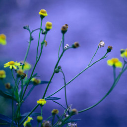 love flower colorful bokeh cute