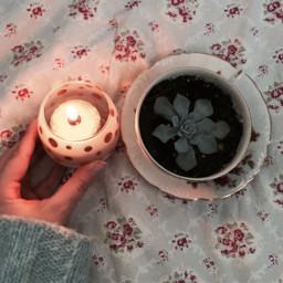 freetoedit candle candlelight plant houseplant