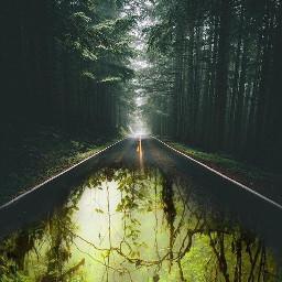 doubleexposure jungle tree road madewithpicsart freetoedit
