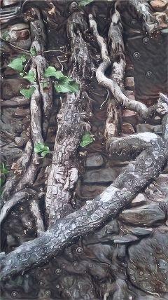 freetoedit tree trees treeoflife treeart