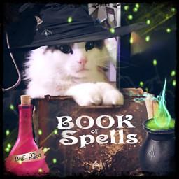 magic cat bookofspells cauldron cute