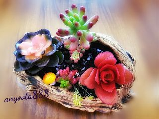 succulents flowers nature beautifulnature cozyhome