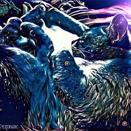 cat catsofpicsart starcat