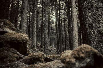 freetoedit dark darkart darkness darkforest
