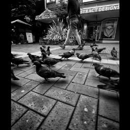 blackandwhite photography freetoedit
