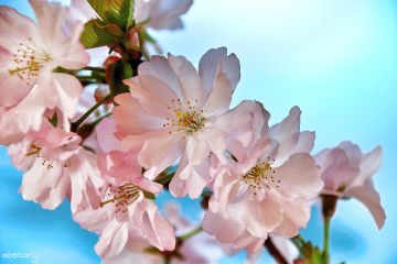 photography blossom spring myphoto nature