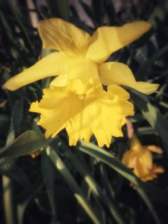 freetoedit spring flower