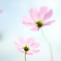 pink flower pretty